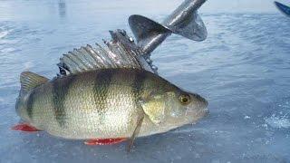 Смотреть фидерную рыбалку на карася